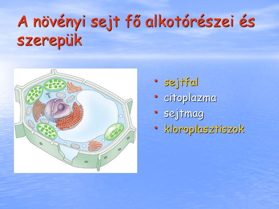 Látványos sejttan Képzeld el, milyen lenne körülnézni egy sejtben, látni, hogy az egyes sejtszervecskék hogyan működnek, mit csinálnak.