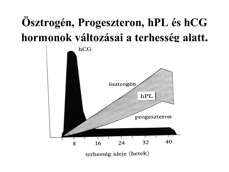 Ösztrogén, Progeszteron, hPL és hCG hormonok változásai a terhesség alatt.