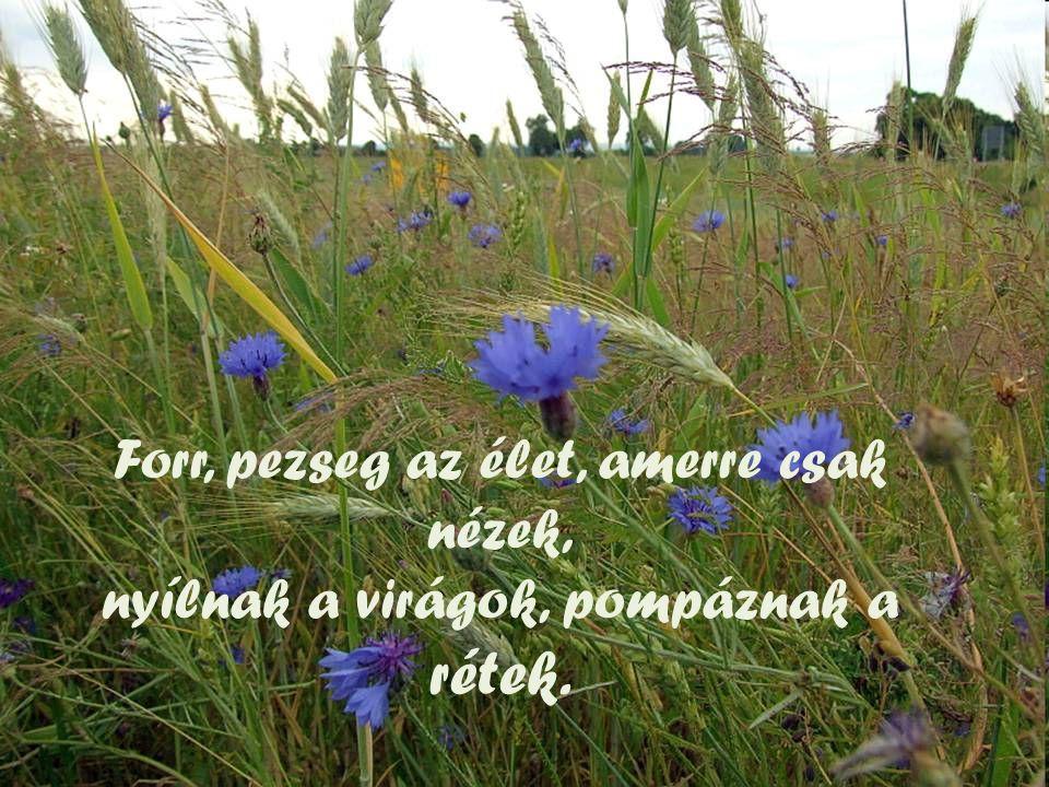 Forr, pezseg az élet, amerre csak nézek, nyílnak a virágok, pompáznak a rétek.