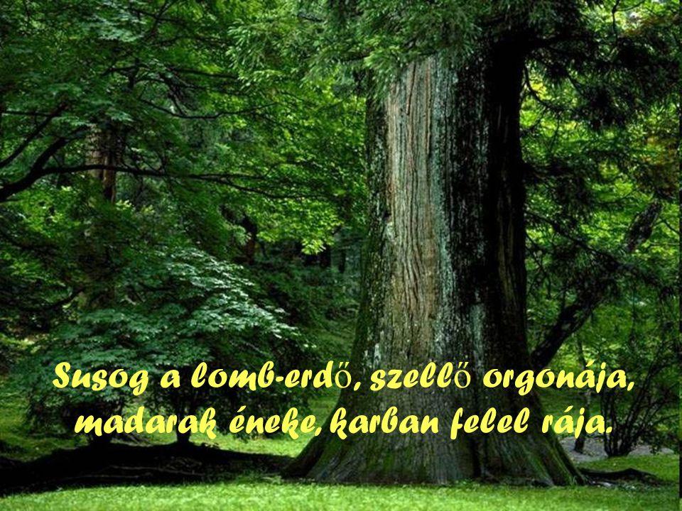 Susog a lomb-erd ő, szell ő orgonája, madarak éneke, karban felel rája.