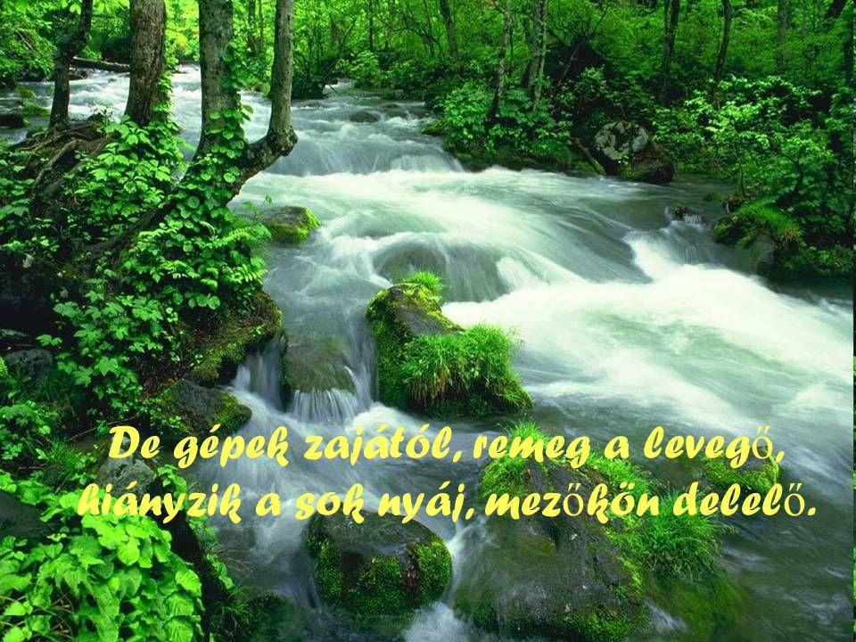 Atyám, áldom Neved, hódoló imában, a természet csodás, fényes templomában!