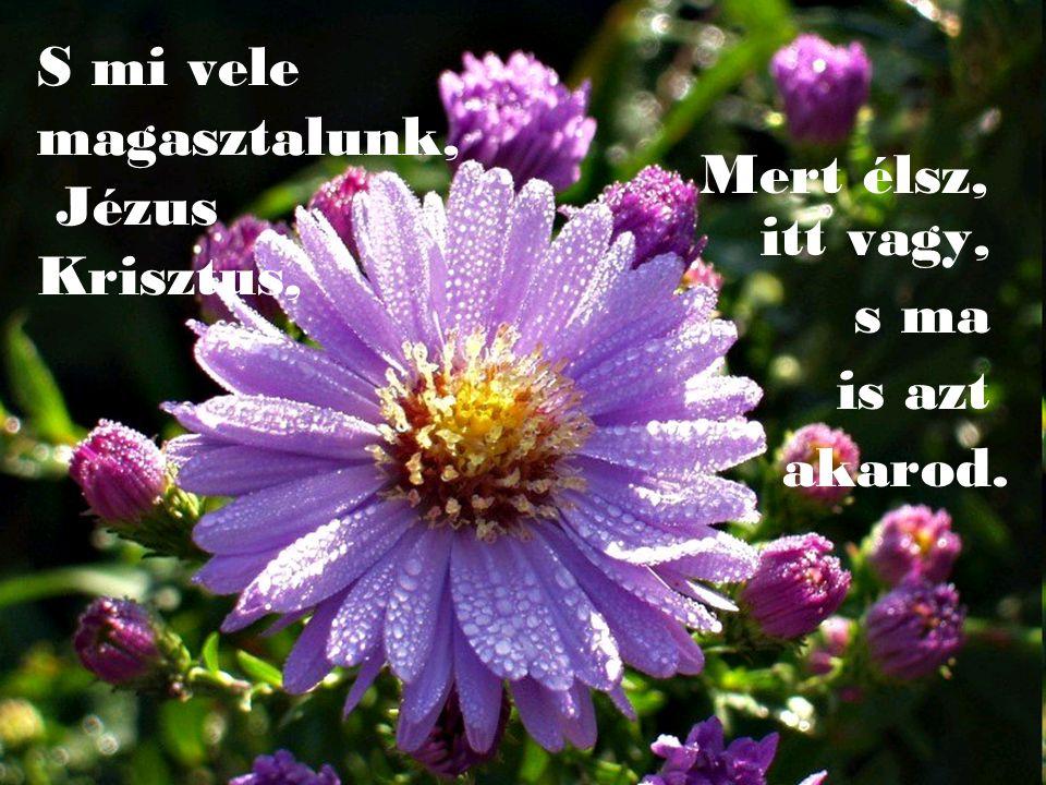 A gyógyulást, az új élet csodáját!