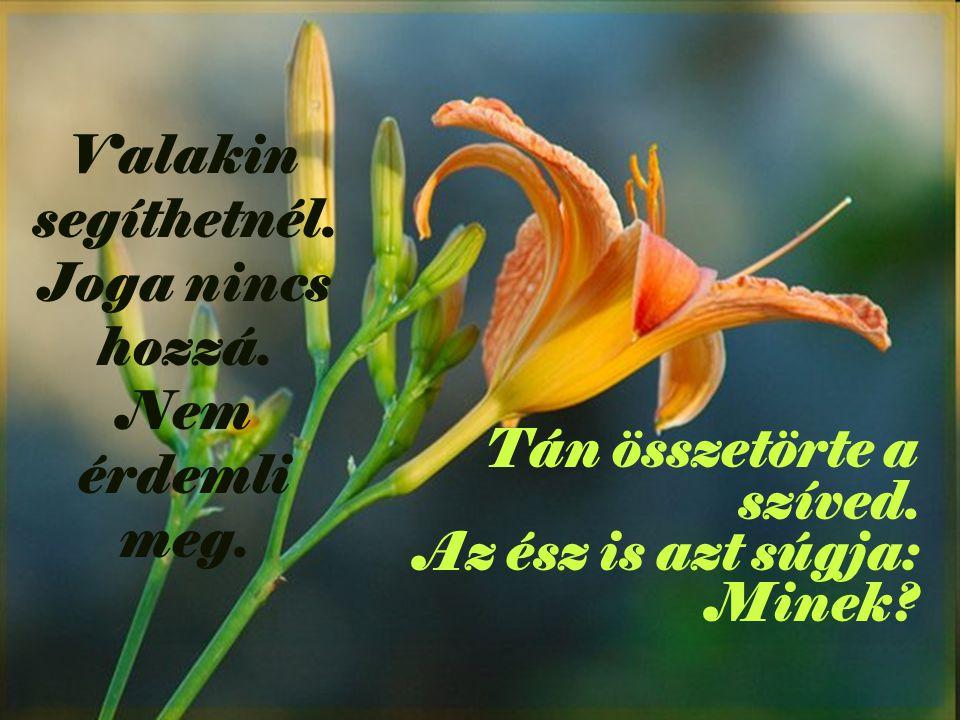 De Krisztus nyomorog benne. És a szelíd hang halkan újra kérlel: Tedd meg, ha teheted!