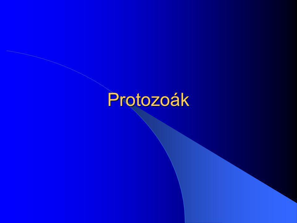 Protozoák