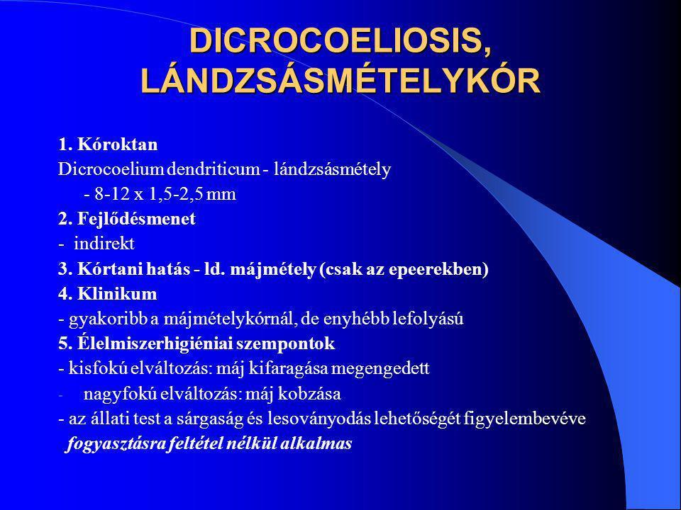 DICROCOELIOSIS, LÁNDZSÁSMÉTELYKÓR 1. Kóroktan Dicrocoelium dendriticum - lándzsásmétely - 8-12 x 1,5-2,5 mm 2. Fejlődésmenet - indirekt 3. Kórtani hat