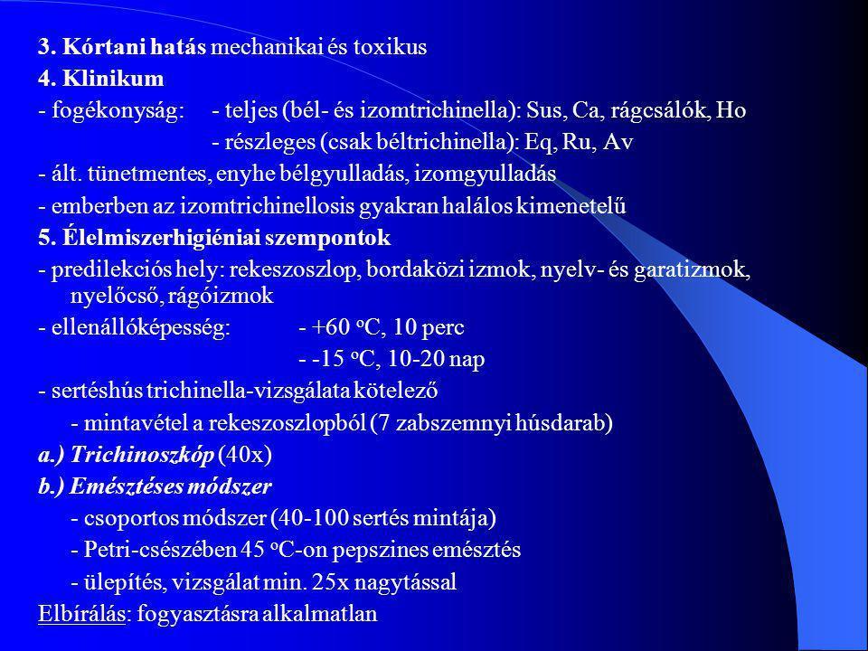 3. Kórtani hatás mechanikai és toxikus 4. Klinikum - fogékonyság:- teljes (bél- és izomtrichinella): Sus, Ca, rágcsálók, Ho - részleges (csak béltrich