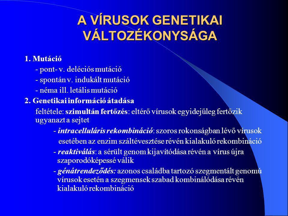 A VÍRUSOK GENETIKAI VÁLTOZÉKONYSÁGA 1. Mutáció - pont- v. deléciós mutáció - spontán v. indukált mutáció - néma ill. letális mutáció 2. Genetikai info