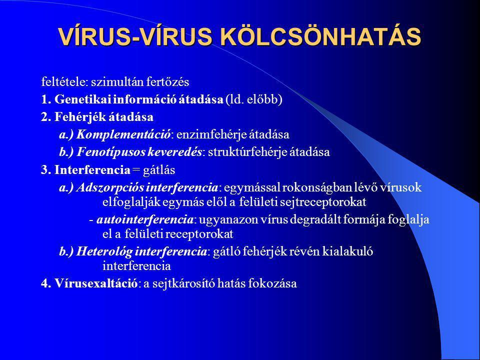 VÍRUS-VÍRUS KÖLCSÖNHATÁS feltétele: szimultán fertőzés 1. Genetikai információ átadása (ld. előbb) 2. Fehérjék átadása a.) Komplementáció: enzimfehérj