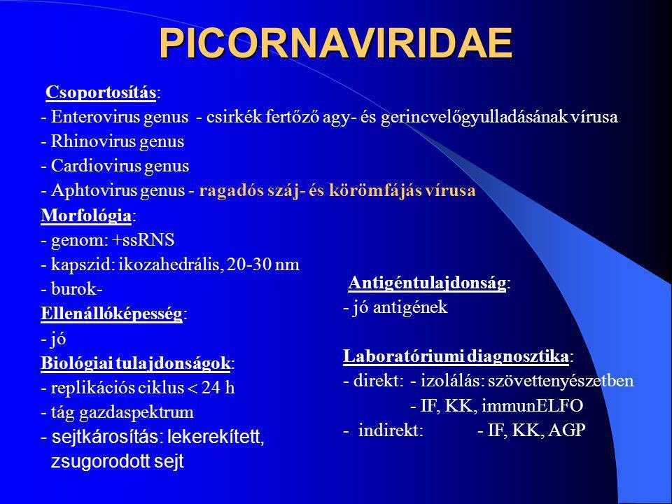 PICORNAVIRIDAE Csoportosítás: - Enterovirus genus - csirkék fertőző agy- és gerincvelőgyulladásának vírusa - Rhinovirus genus - Cardiovirus genus - Ap