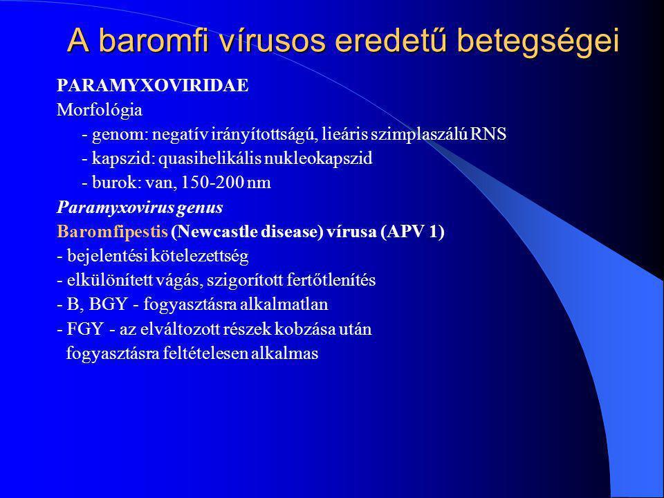 A baromfi vírusos eredetű betegségei PARAMYXOVIRIDAE Morfológia - genom: negatív irányítottságú, lieáris szimplaszálú RNS - kapszid: quasihelikális nu