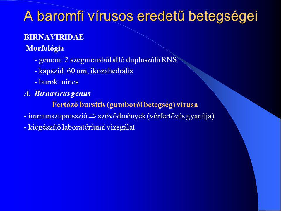 BIRNAVIRIDAE Morfológia - genom: 2 szegmensből álló duplaszálú RNS - kapszid: 60 nm, ikozahedrális - burok: nincs A.Birnavirus genus Fertőző bursitis