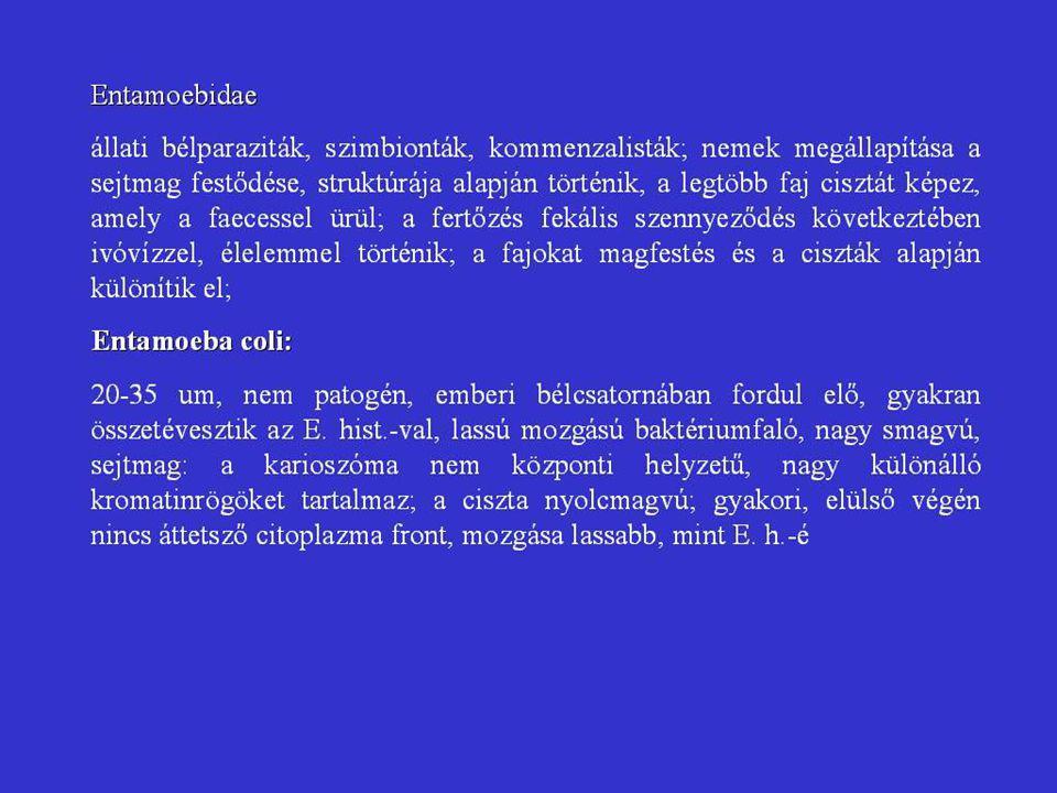 VÍRUS-SEJT KÖLCSÖNHATÁS 1.