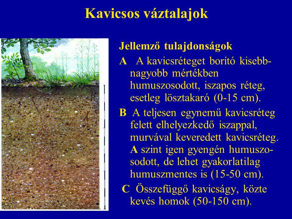 Kavicsos váztalajok Jellemző tulajdonságok A A kavicsréteget borító kisebb- nagyobb mértékben humuszosodott, iszapos réteg, esetleg lösztakaró (0-15 c