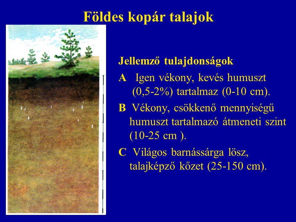Földes kopár talajok Jellemző tulajdonságok A Igen vékony, kevés humuszt (0,5-2%) tartalmaz (0-10 cm). B Vékony, csökkenő mennyiségű humuszt tartalmaz