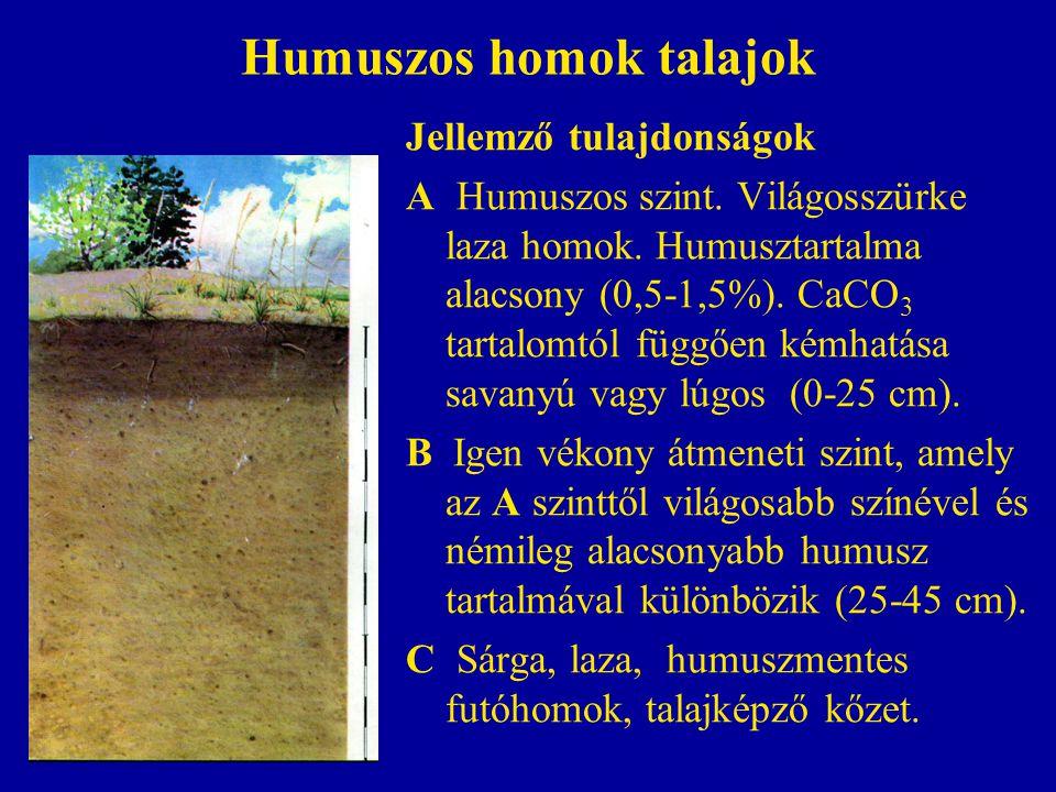 Humuszos homok talajok Jellemző tulajdonságok A Humuszos szint. Világosszürke laza homok. Humusztartalma alacsony (0,5-1,5%). CaCO 3 tartalomtól függő