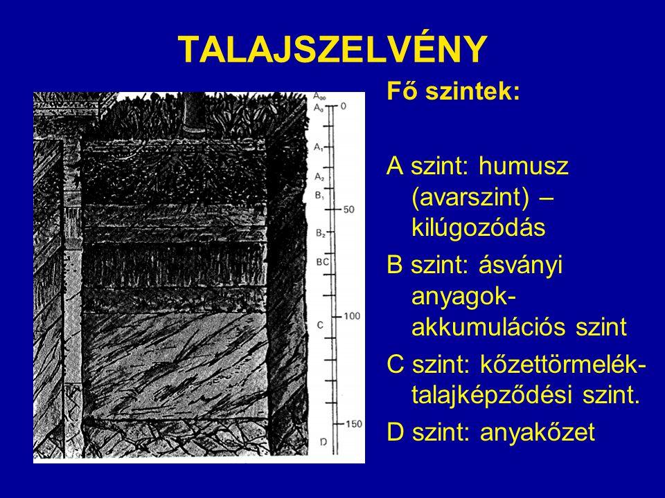 TALAJSZELVÉNY Fő szintek: A szint: humusz (avarszint) – kilúgozódás B szint: ásványi anyagok- akkumulációs szint C szint: kőzettörmelék- talajképződés