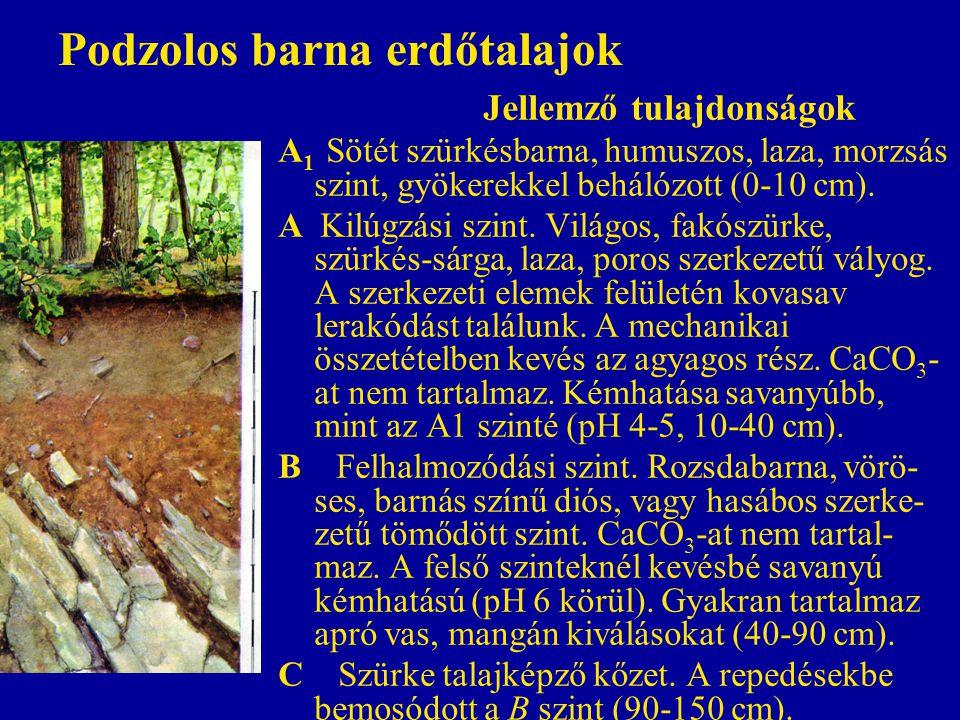 Podzolos barna erdőtalajok Jellemző tulajdonságok A 1 Sötét szürkésbarna, humuszos, laza, morzsás szint, gyökerekkel behálózott (0-10 cm). A Kilúgzási