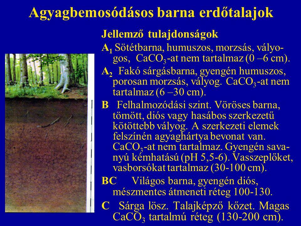 Agyagbemosódásos barna erdőtalajok Jellemző tulajdonságok A 1 Sötétbarna, humuszos, morzsás, vályo- gos, CaCO 3 -at nem tartalmaz (0 –6 cm). A 2 Fakó