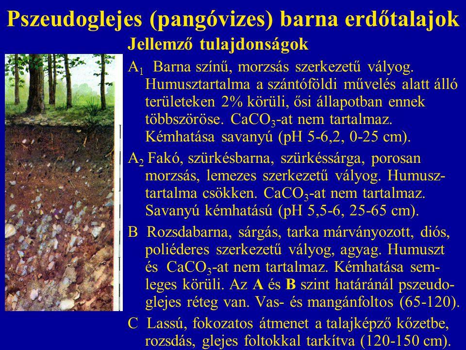 Pszeudoglejes (pangóvizes) barna erdőtalajok Jellemző tulajdonságok A 1 Barna színű, morzsás szerkezetű vályog. Humusztartalma a szántóföldi művelés a
