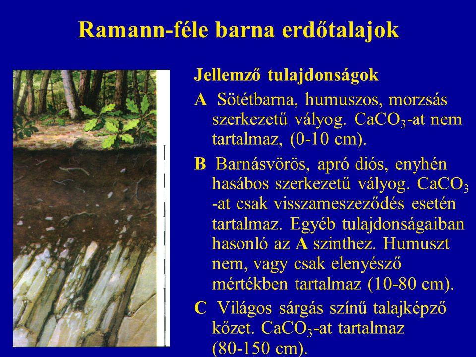 Ramann-féle barna erdőtalajok Jellemző tulajdonságok A Sötétbarna, humuszos, morzsás szerkezetű vályog. CaCO 3 -at nem tartalmaz, (0-10 cm). B Barnásv