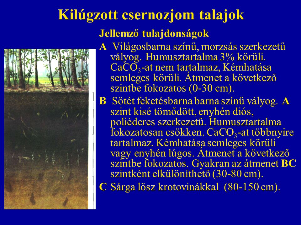 Kilúgzott csernozjom talajok Jellemző tulajdonságok A Világosbarna színű, morzsás szerkezetű vályog. Humusztartalma 3% körüli. CaCO 3 -at nem tartalma