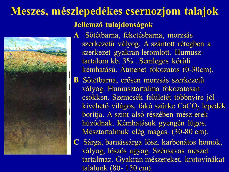 Meszes, mészlepedékes csernozjom talajok Jellemző tulajdonságok A Sötétbarna, feketésbarna, morzsás szerkezetű vályog. A szántott rétegben a szerkezet