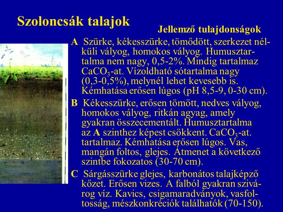 Szoloncsák talajok Jellemző tulajdonságok A Szürke, kékesszürke, tömődött, szerkezet nél- küli vályog, homokos vályog. Humusztar- talma nem nagy, 0,5-
