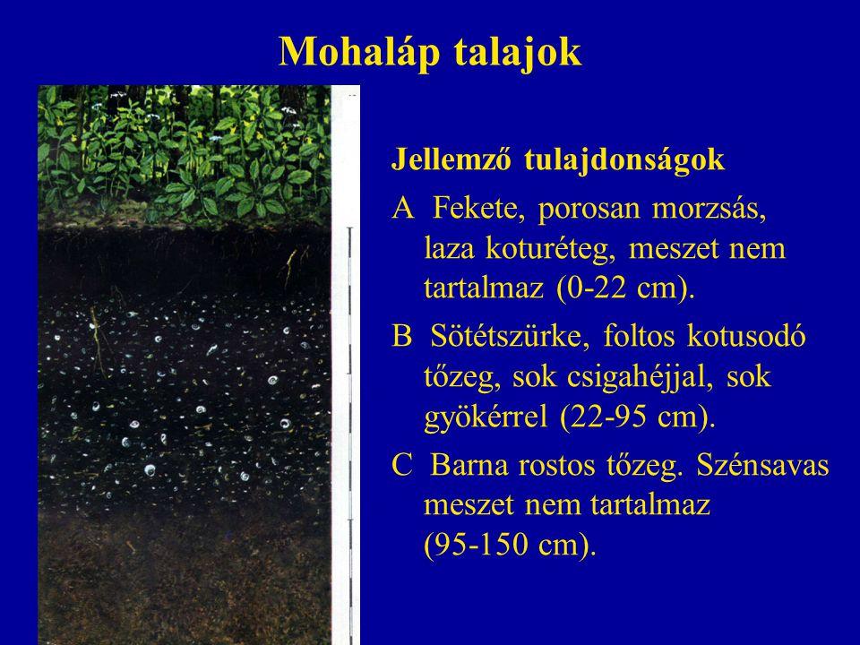 Mohaláp talajok Jellemző tulajdonságok A Fekete, porosan morzsás, laza koturéteg, meszet nem tartalmaz (0-22 cm). B Sötétszürke, foltos kotusodó tőzeg