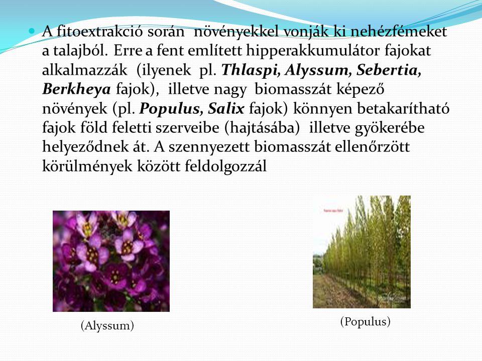 A fitoextrakció során növényekkel vonják ki nehézfémeket a talajból. Erre a fent említett hipperakkumulátor fajokat alkalmazzák (ilyenek pl. Thlaspi,