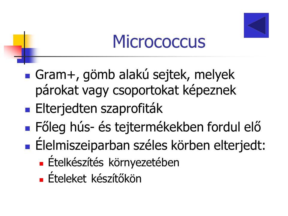 Micrococcus Gram+, gömb alakú sejtek, melyek párokat vagy csoportokat képeznek Elterjedten szaprofiták Főleg hús- és tejtermékekben fordul elő Élelmis