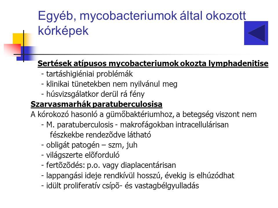 Sertések atípusos mycobacteriumok okozta lymphadenitise - tartáshigiéniai problémák - klinikai tünetekben nem nyilvánul meg - húsvizsgálatkor derül rá