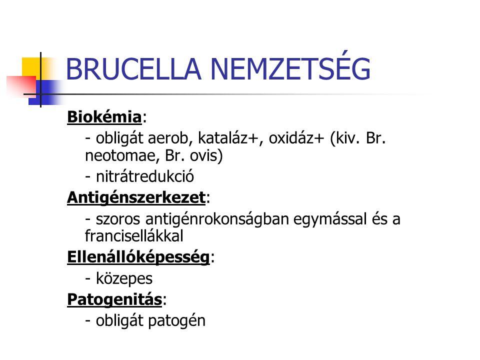 BRUCELLA NEMZETSÉG Biokémia: - obligát aerob, kataláz+, oxidáz+ (kiv. Br. neotomae, Br. ovis) - nitrátredukció Antigénszerkezet: - szoros antigénrokon