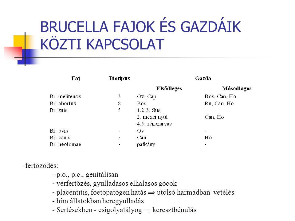 BRUCELLA FAJOK ÉS GAZDÁIK KÖZTI KAPCSOLAT -fertőződés: - p.o., p.c., genitálisan - vérfertőzés, gyulladásos elhalásos gócok - placentitis, foetopatoge