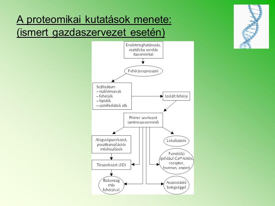 A proteomikai kutatások menete: (ismert gazdaszervezet esetén)