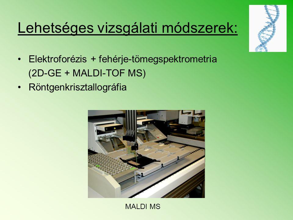 Lehetséges vizsgálati módszerek: Elektroforézis + fehérje-tömegspektrometria (2D-GE + MALDI-TOF MS) Röntgenkrisztallográfia MALDI MS