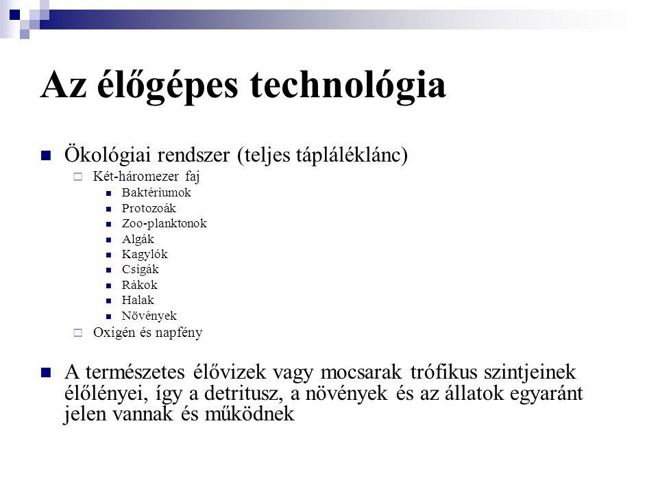 Az élőgépes technológia Ökológiai rendszer (teljes tápláléklánc)  Két-háromezer faj Baktériumok Protozoák Zoo-planktonok Algák Kagylók Csigák Rákok H