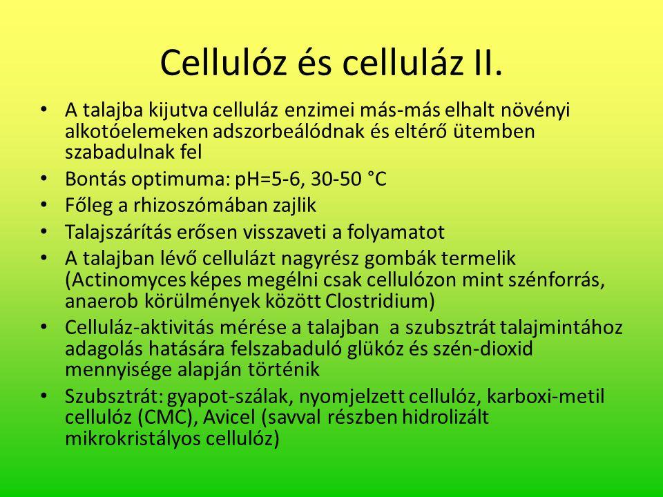 Cellulóz és celluláz II. A talajba kijutva celluláz enzimei más-más elhalt növényi alkotóelemeken adszorbeálódnak és eltérő ütemben szabadulnak fel Bo