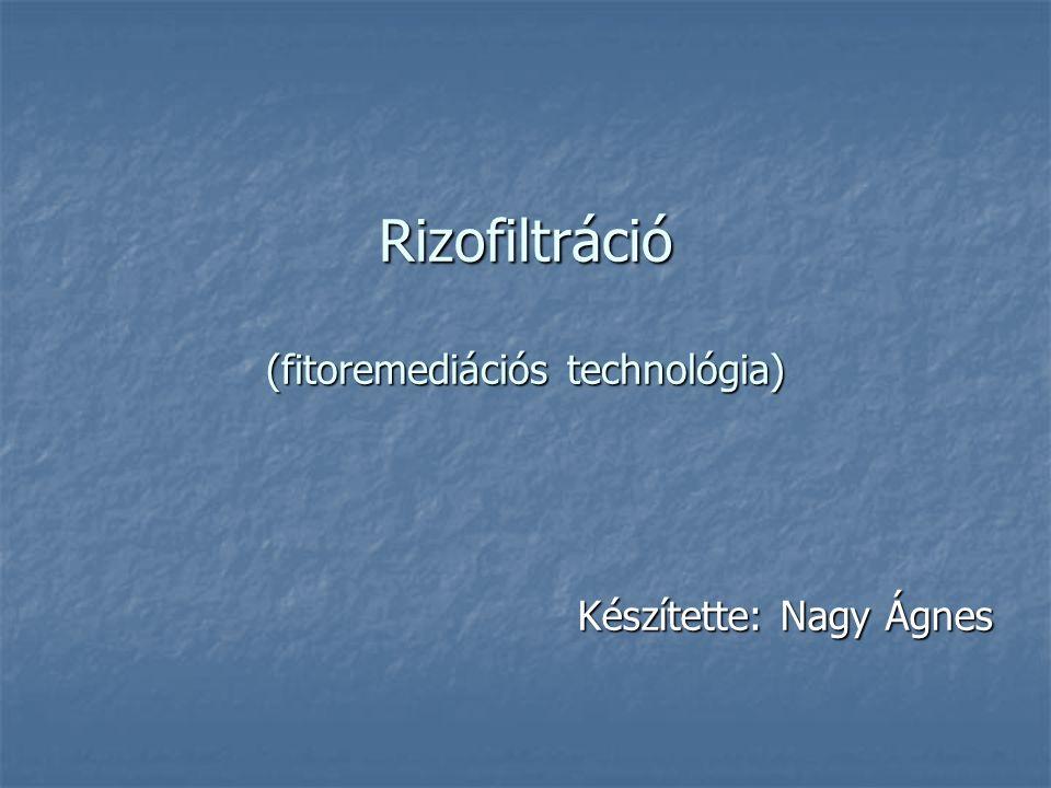 Rizofiltráció (fitoremediációs technológia) Készítette: Nagy Ágnes