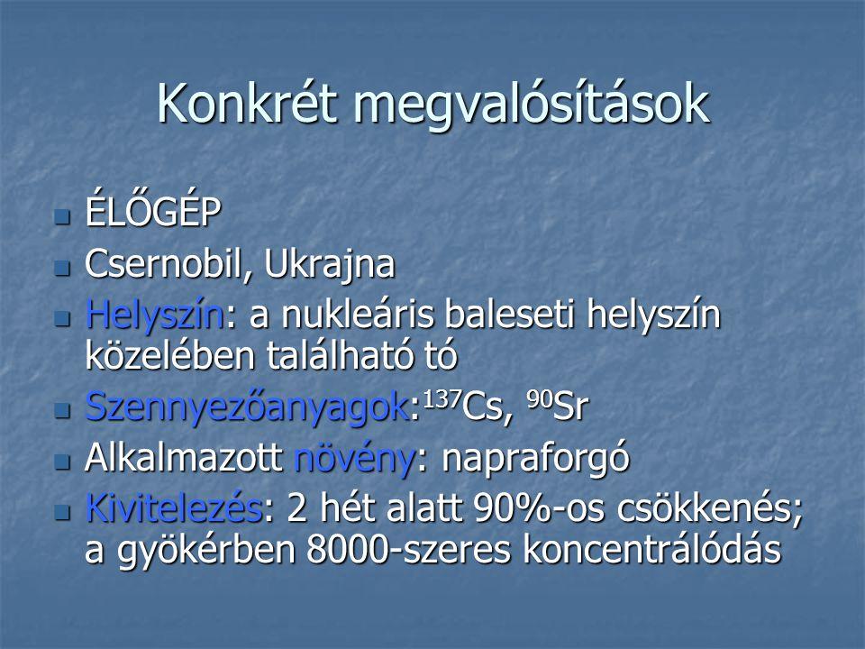Konkrét megvalósítások ÉLŐGÉP ÉLŐGÉP Csernobil, Ukrajna Csernobil, Ukrajna Helyszín: a nukleáris baleseti helyszín közelében található tó Helyszín: a nukleáris baleseti helyszín közelében található tó Szennyezőanyagok: 137 Cs, 90 Sr Szennyezőanyagok: 137 Cs, 90 Sr Alkalmazott növény: napraforgó Alkalmazott növény: napraforgó Kivitelezés: 2 hét alatt 90%-os csökkenés; a gyökérben 8000-szeres koncentrálódás Kivitelezés: 2 hét alatt 90%-os csökkenés; a gyökérben 8000-szeres koncentrálódás