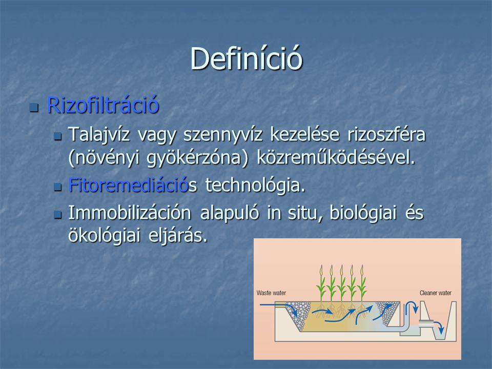 Definíció Rizofiltráció Rizofiltráció Talajvíz vagy szennyvíz kezelése rizoszféra (növényi gyökérzóna) közreműködésével. Talajvíz vagy szennyvíz kezel