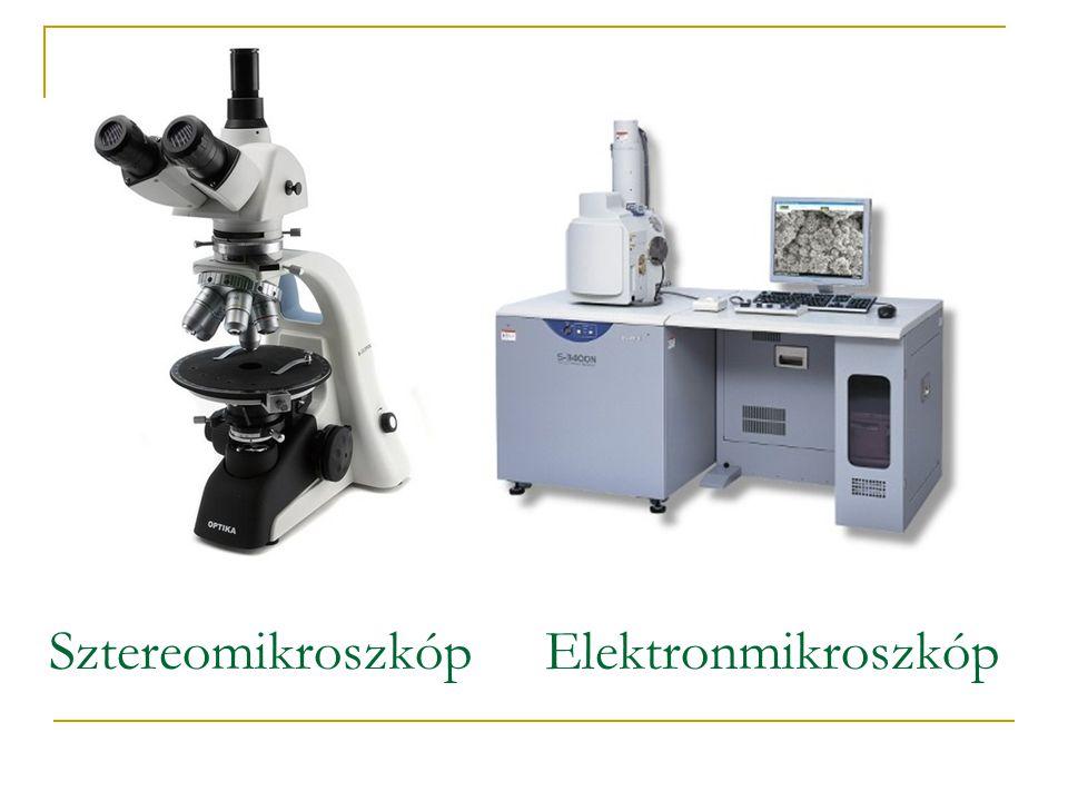 SztereomikroszkópElektronmikroszkóp