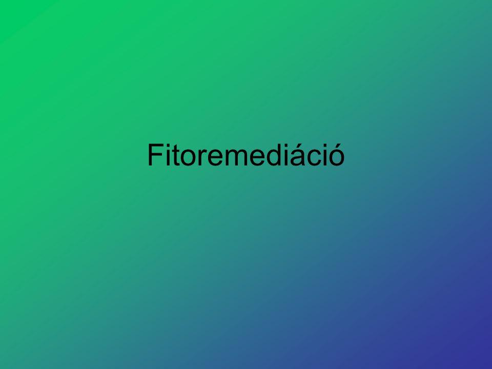 Definíció A fitoremediáció elnevezés a görög fiton – növény – és a latin remediare – orvosol, helyrehoz – szavak kombinációja.