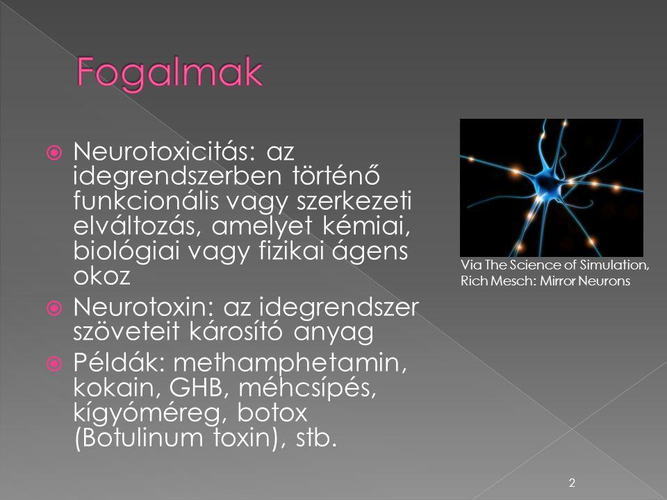  Neurotoxicitás: az idegrendszerben történő funkcionális vagy szerkezeti elváltozás, amelyet kémiai, biológiai vagy fizikai ágens okoz  Neurotoxin: az idegrendszer szöveteit károsító anyag  Példák: methamphetamin, kokain, GHB, méhcsípés, kígyóméreg, botox (Botulinum toxin), stb.