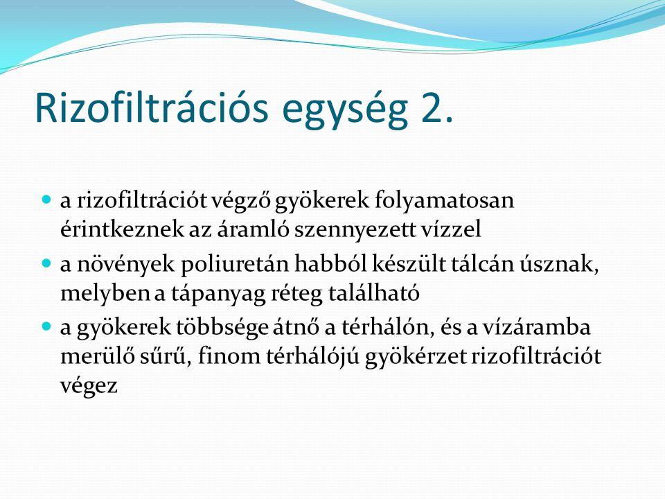 Rizofiltrációs egység 2. a rizofiltrációt végző gyökerek folyamatosan érintkeznek az áramló szennyezett vízzel a növények poliuretán habból készült tá