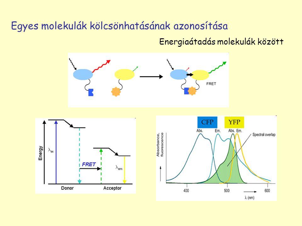 Egyes molekulák kölcsönhatásának azonosítása Energiaátadás molekulák között