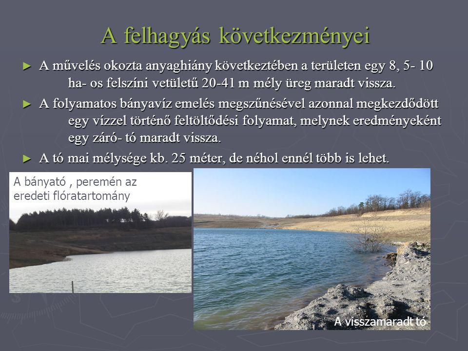 A felhagyás következményei ► A művelés okozta anyaghiány következtében a területen egy 8, 5- 10 ha- os felszíni vetületű 20-41 m mély üreg maradt vissza.