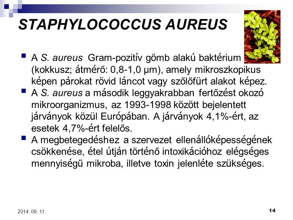 14 2014. 09. 11. STAPHYLOCOCCUS AUREUS  A S. aureus Gram-pozit í v g ö mb alak ú bakt é rium (kokkusz; á tm é rő: 0,8-1,0 μm), amely mikroszkopikus k