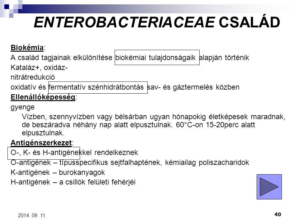 40 2014. 09. 11. Biokémia: A család tagjainak elkülönítése biokémiai tulajdonságaik alapján történik Kataláz+, oxidáz- nitrátredukció oxidatív és ferm