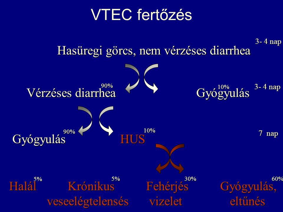 VTEC fertőzés Vérzéses diarrhea Gyógyulás Hasüregi görcs, nem vérzéses diarrhea GyógyulásHUS Gyógyulás HUS Halál Krónikus FehérjésGyógyulás, Halál Kró