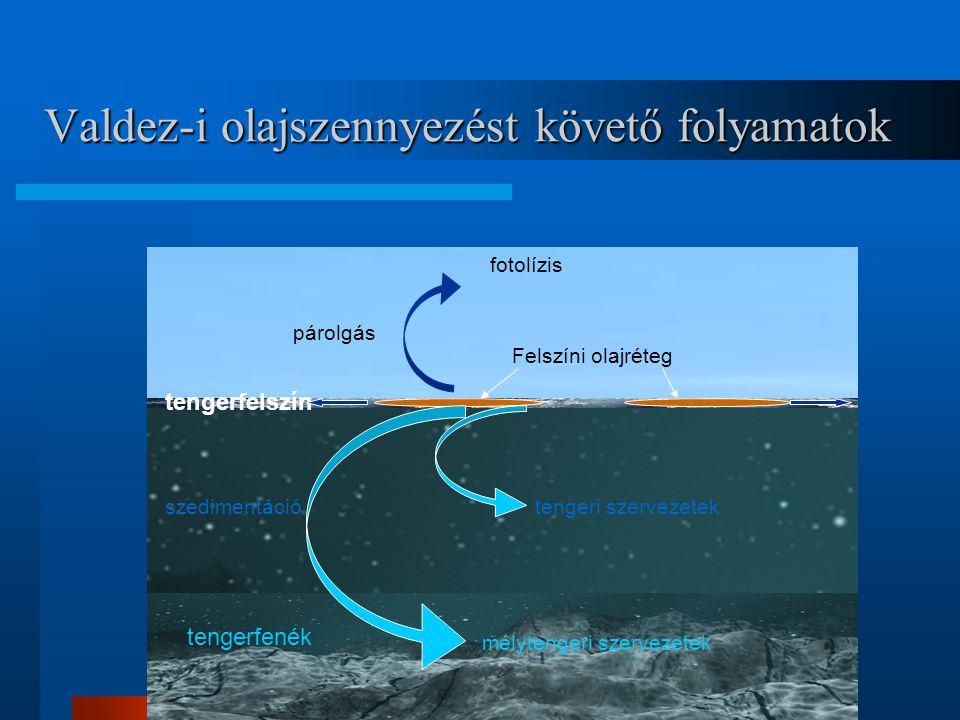 tengerfenék tengerfelszín Felszíni olajréteg párolgás szedimentáció mélytengeri szervezetek tengeri szervezetek fotolízis Valdez-i olajszennyezést köv